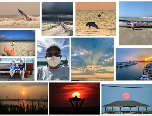 2020 Amateur Photo Contest Voting